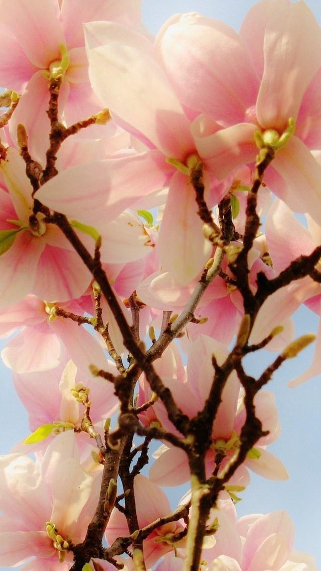 朦胧之美鲜花 植物花卉 风景壁纸 苹果手机高清壁纸 x