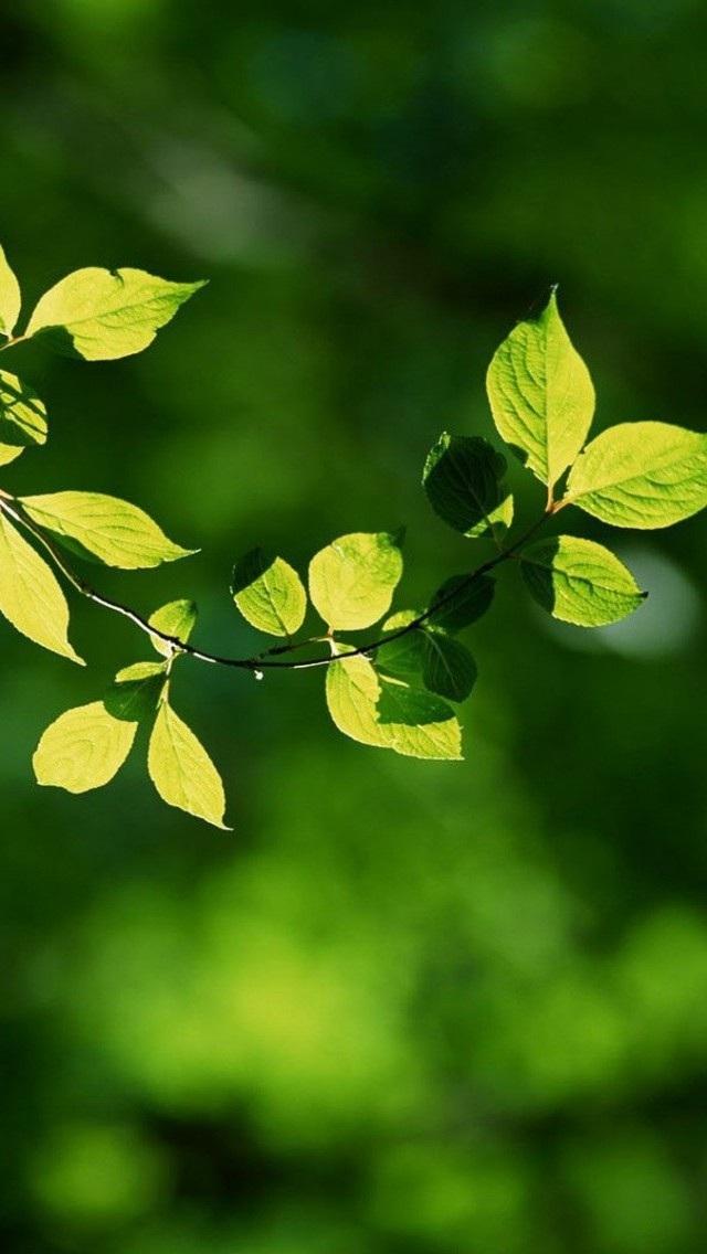 风景高清壁纸10279740 植物花卉 风景壁纸 苹果手机 x