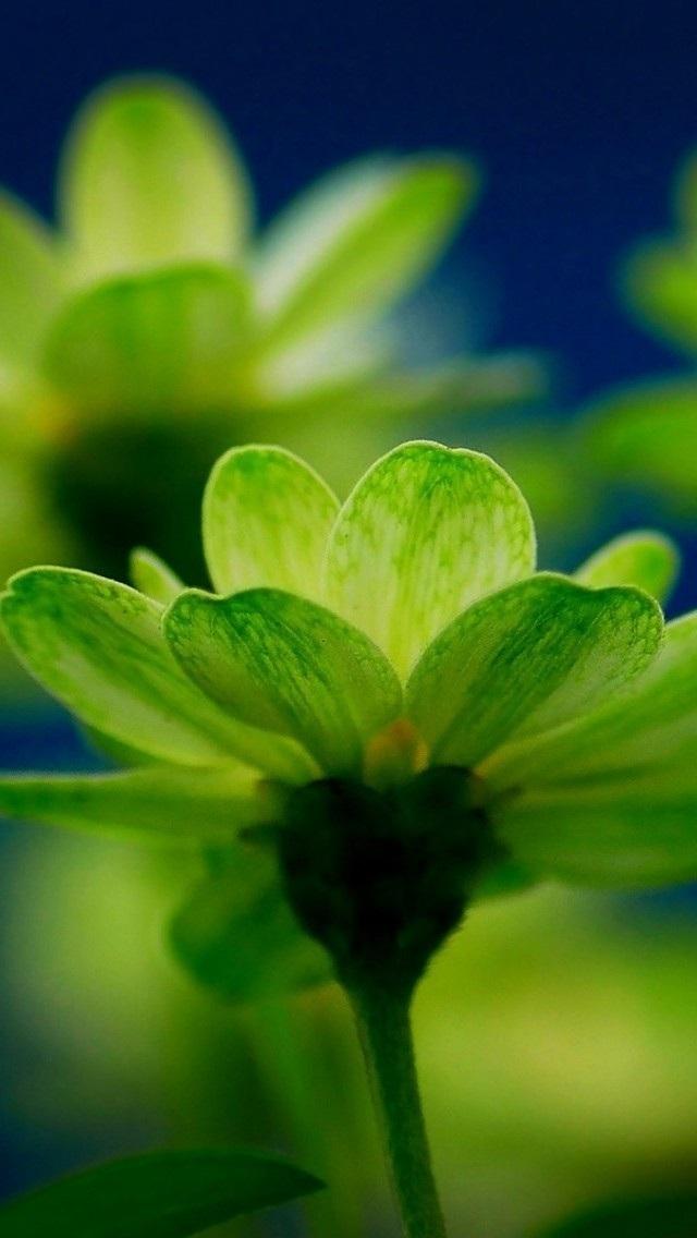 风景高清壁纸10280615 植物花卉 风景壁纸 苹果手机 x