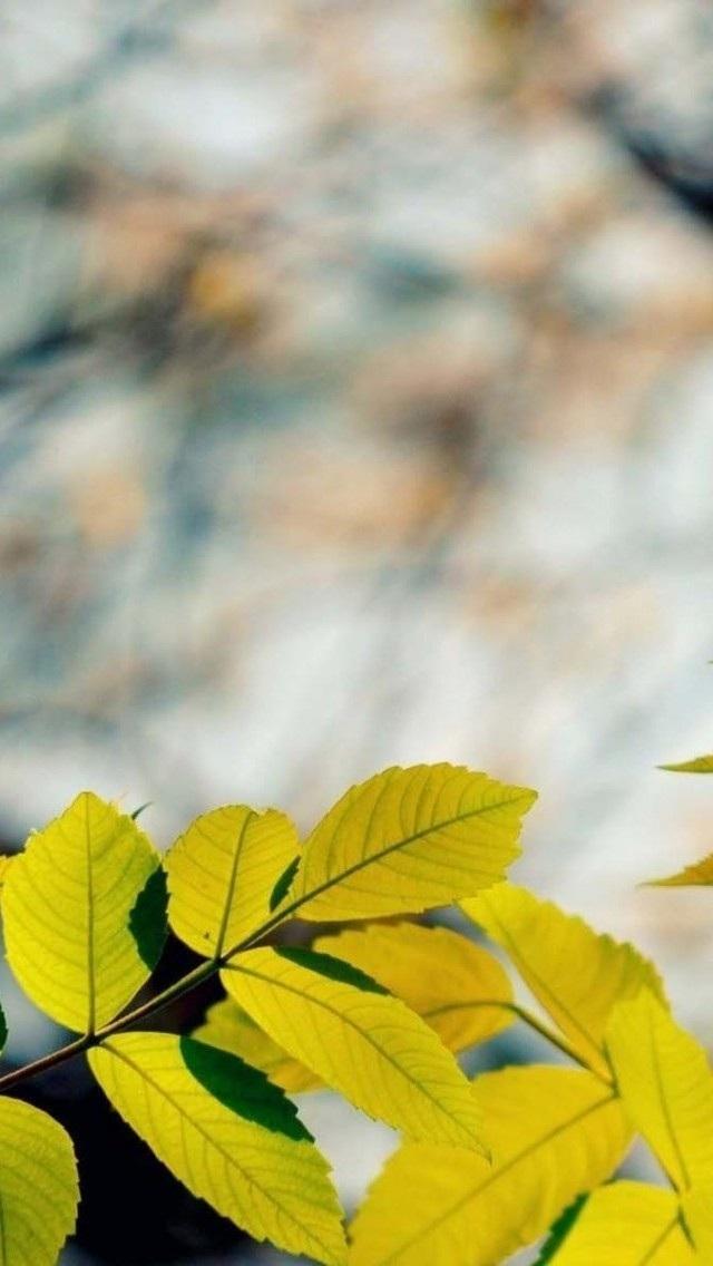 风景高清壁纸10269677 植物花卉 风景壁纸 苹果手机 x