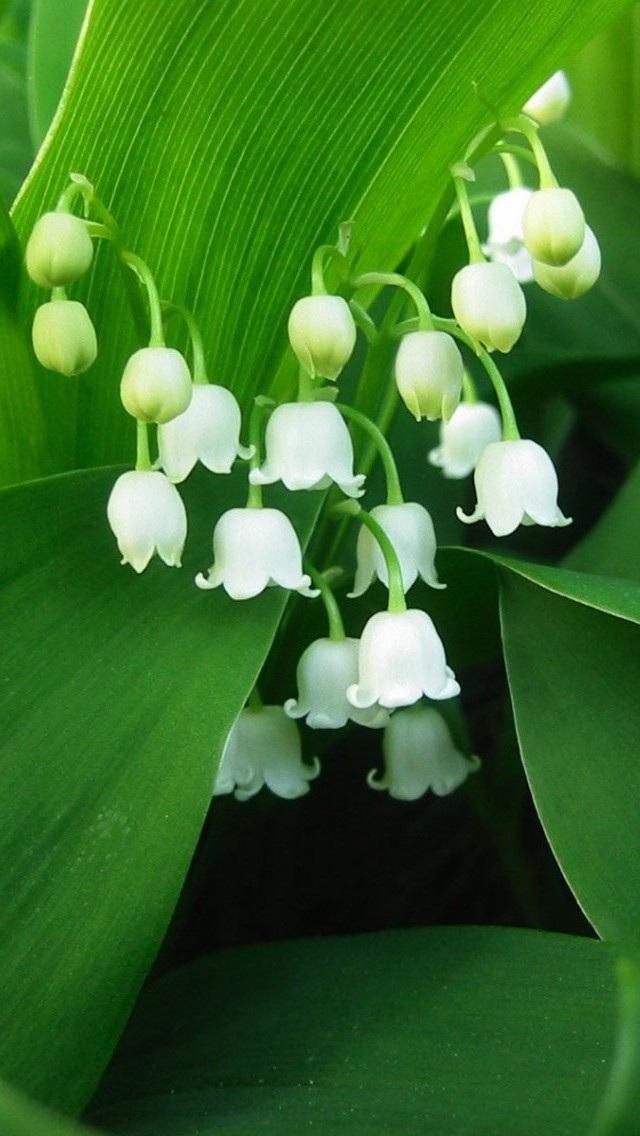 风景高清壁纸10268491 植物花卉 风景壁纸 苹果手机 x