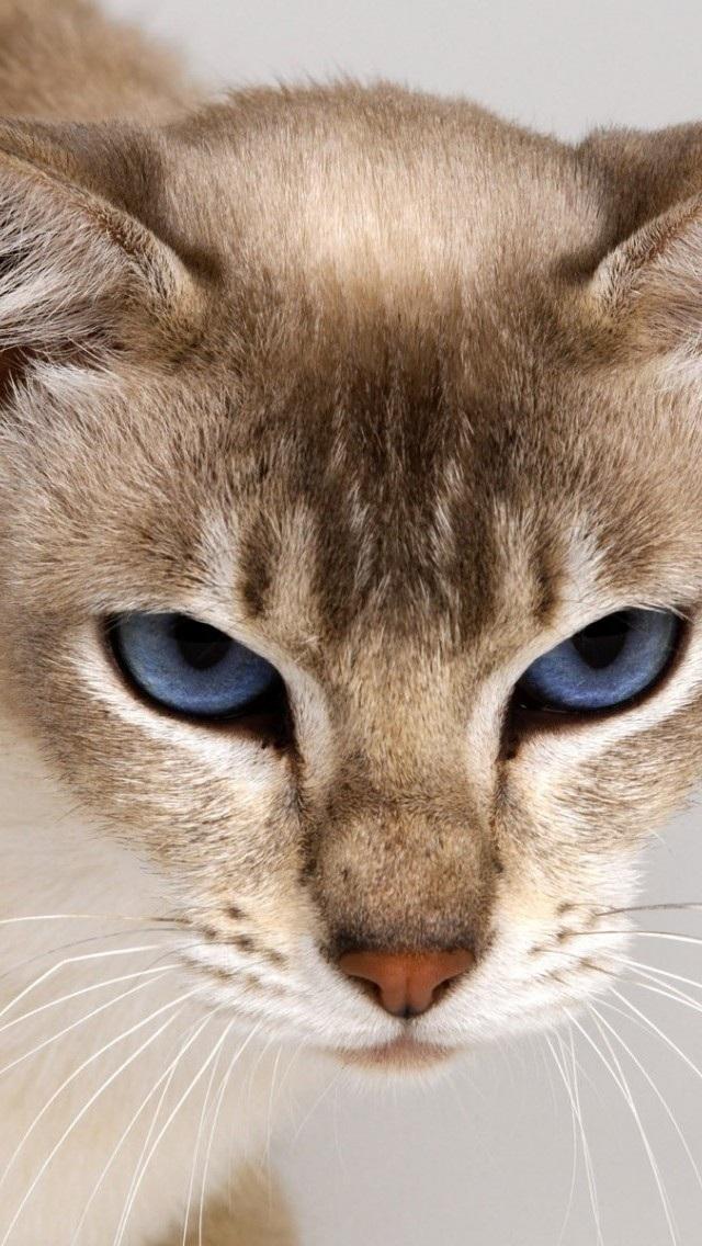 猫咪iphone5壁纸 可爱猫咪 动物壁纸 苹果手机高清 x