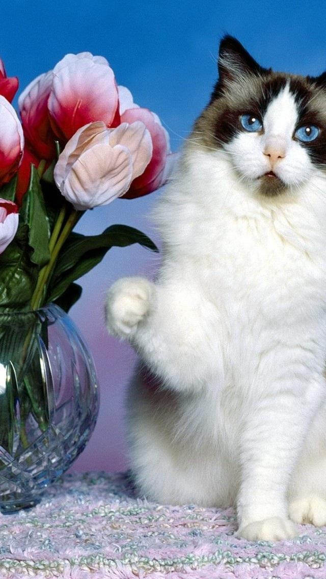 动物高清壁纸10271227 可爱猫咪 动物壁纸 苹果手机 x