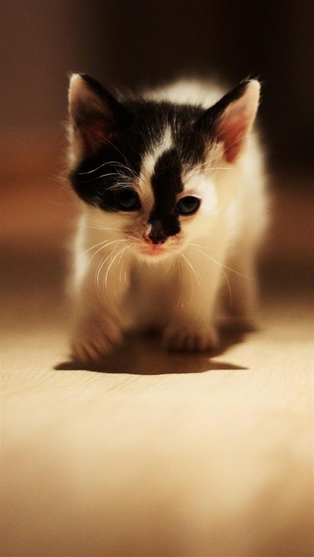 iphone5高清壁纸10196649 可爱猫咪 动物壁纸 苹果 x