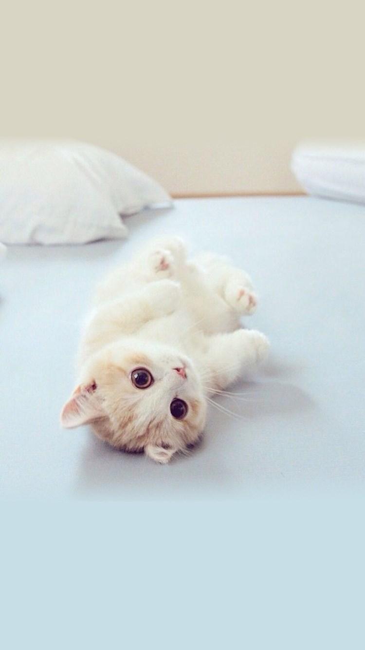 萌猫 可爱 宠物 呆萌 苹果手机高清壁纸 750x1334