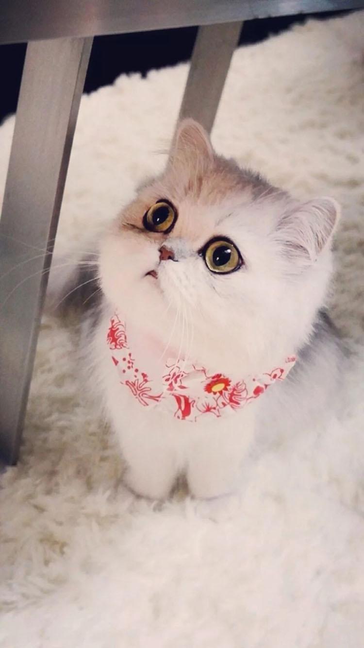 可爱喵星人 猫咪 呆萌 苹果手机高清壁纸 750x1334