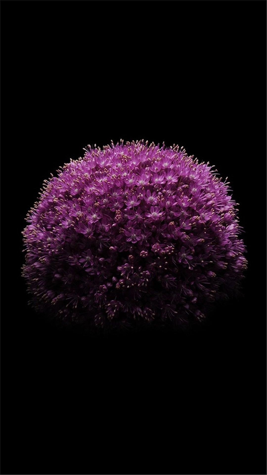 紫色 花朵 ios 科技 蘋果 蘋果手機高清壁紙 1080x