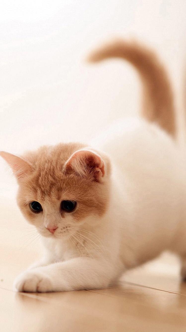 猫咪 动物 小猫 可爱 地板 苹果手机高清壁纸 750x