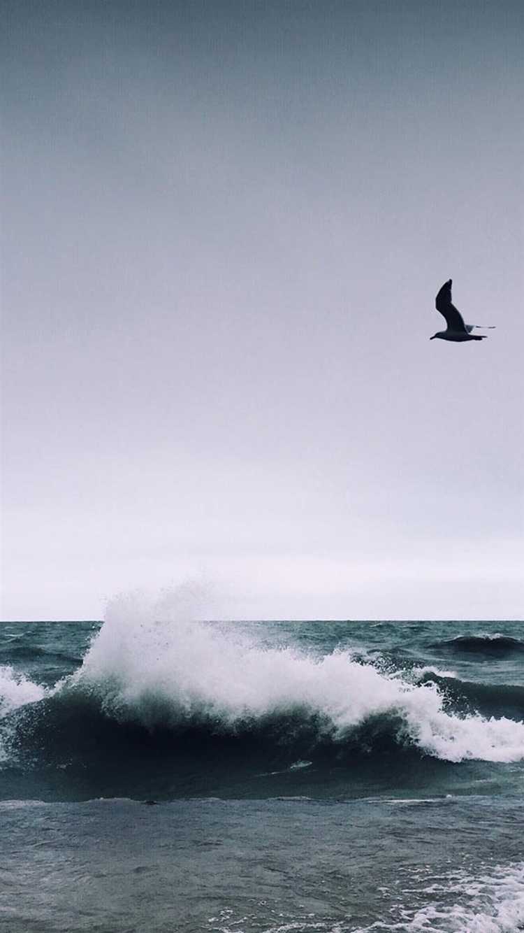 大海 海浪 海鸥 海鸟 苹果手机高清壁纸 750x1334