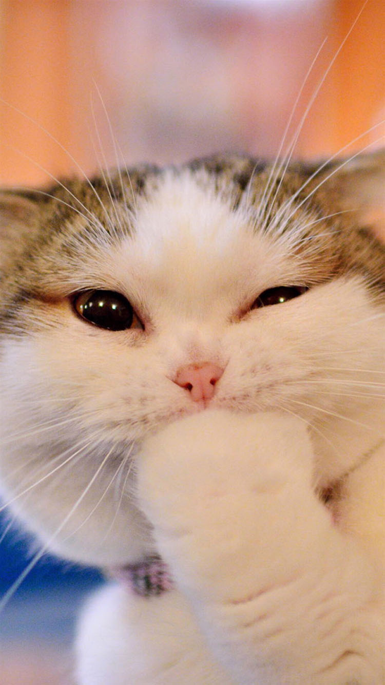 眨眼 可爱 呆萌 猫咪 萌宠 苹果手机高清壁纸 750x