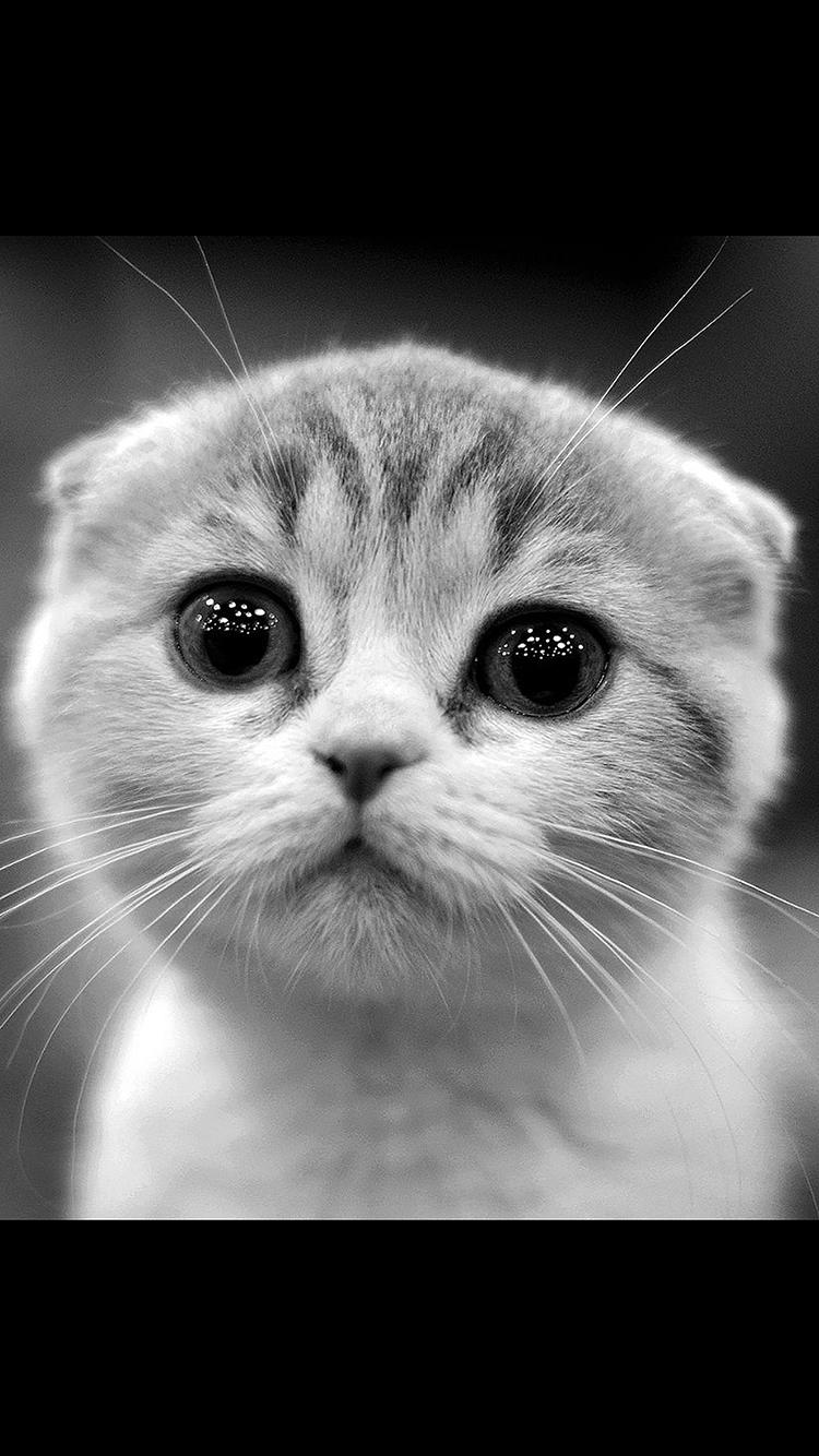 猫咪 动物 小猫 可爱 苹果手机高清壁纸 750x1334