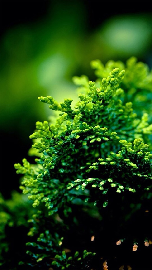 绿色小清新植物 护眼壁纸 苹果手机高清壁纸 640x1136