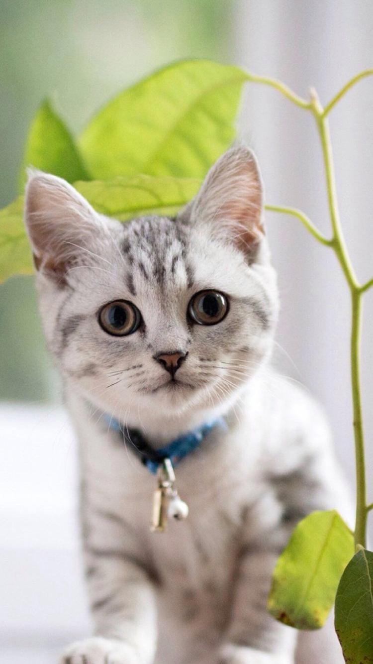 猫咪 娇小 可爱 动物 苹果手机高清壁纸 750x1334