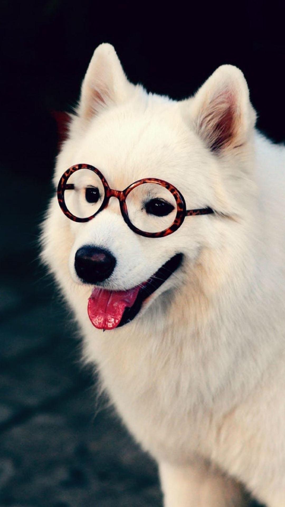 萨摩耶 动物 可爱 狗狗 苹果手机高清壁纸 1080x1920
