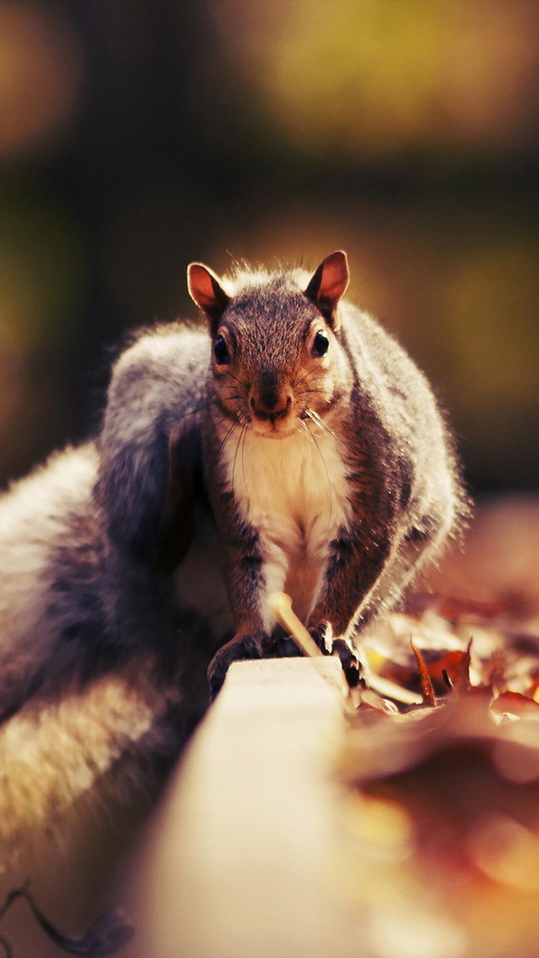 松鼠 动物 特写 可爱