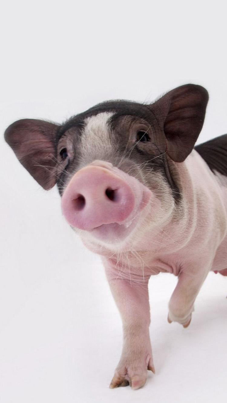 丑萌的猪宝宝写真 粉色黑色 苹果手机高清壁纸 750x