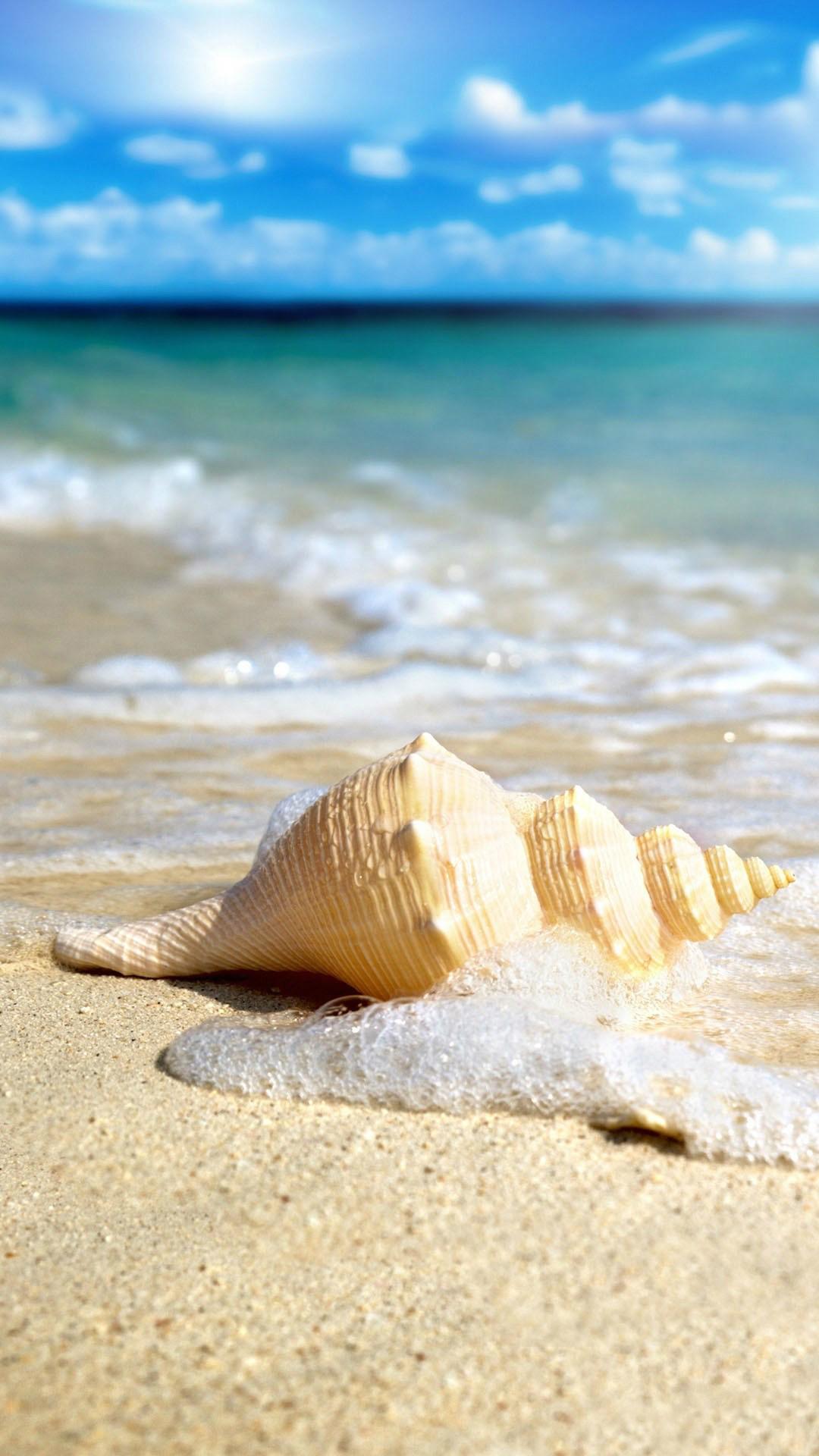 大海 海滩 海螺 蓝天 苹果手机高清壁纸 1080x1920