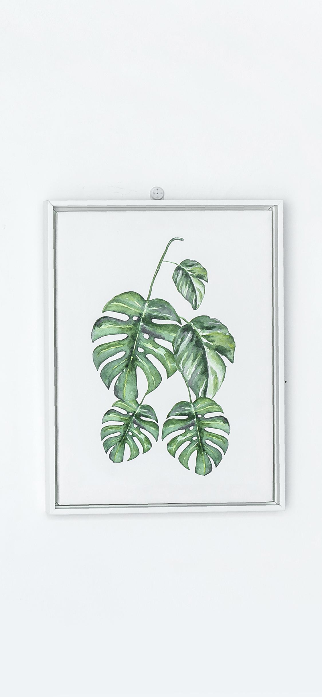 壁画 简约 龟背竹手绘 苹果手机高清壁纸 1125x2436