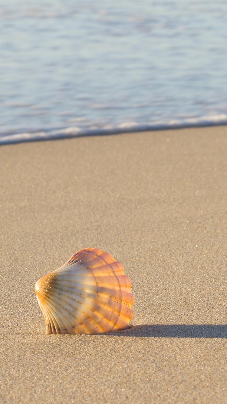 贝壳 沙滩 海浪 夕阳 苹果手机高清壁纸 750x1334