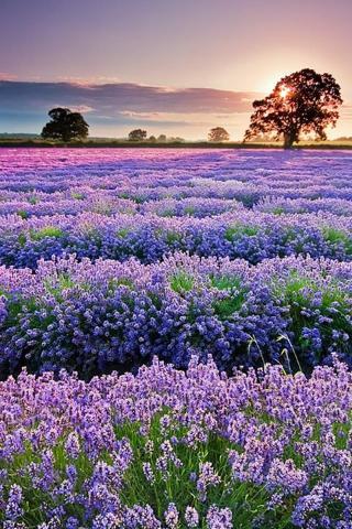 春暖花开 风景