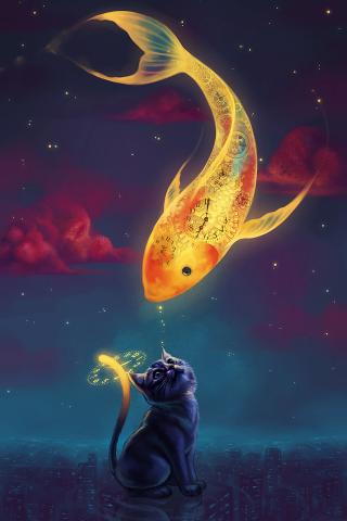 小猫 大金鱼