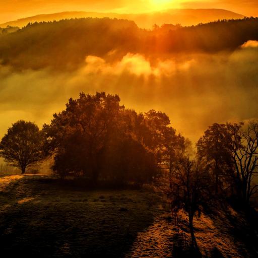 阳光 壮丽 余晖 风景 棕色