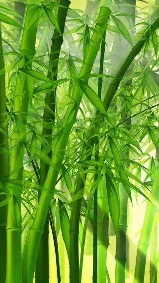 iPhone5壁纸 植物花卉 风景壁纸