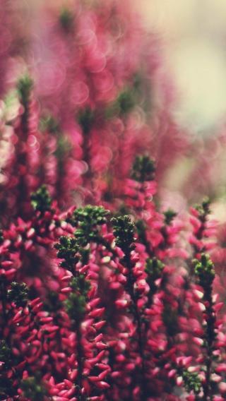 风景高清壁纸10270403 植物花卉 风景壁纸