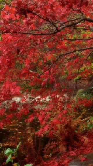 风景高清壁纸10282653 植物花卉 风景壁纸