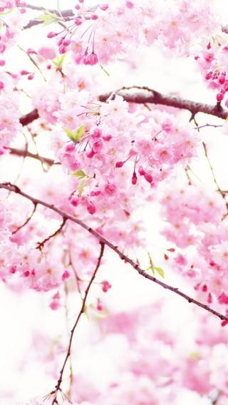 风景高清壁纸10271324 植物花卉 风景壁纸