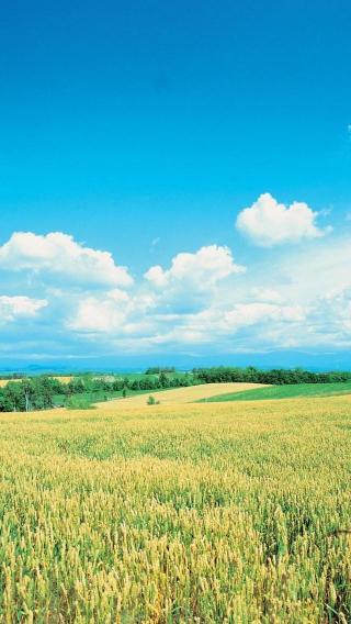iPhone壁纸 美丽风光 风景壁纸