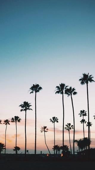 风景 椰树 远眺 海边