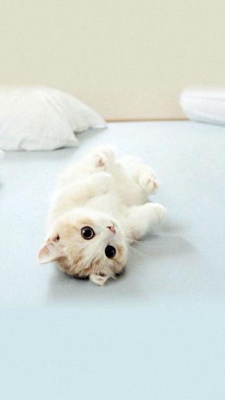 猫咪 动物 小猫 可爱
