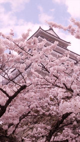 樱花 日本 粉色 浪漫