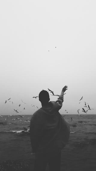 海洋 背影 黑白 海鸥 大海