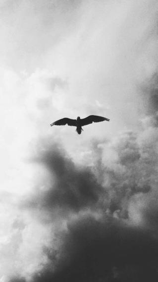 天空 黑白 鸟 飞翔