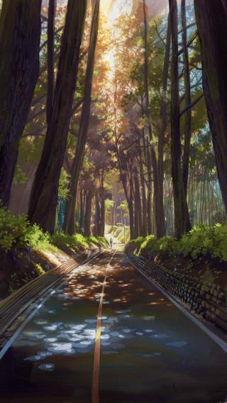 宁静 树林 阳光 道路