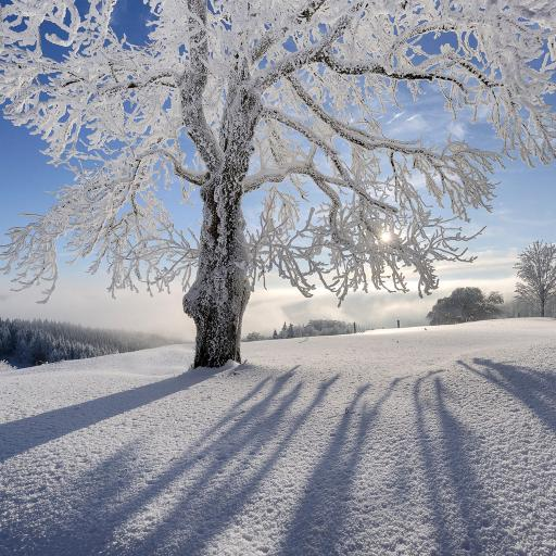 冬季 大树