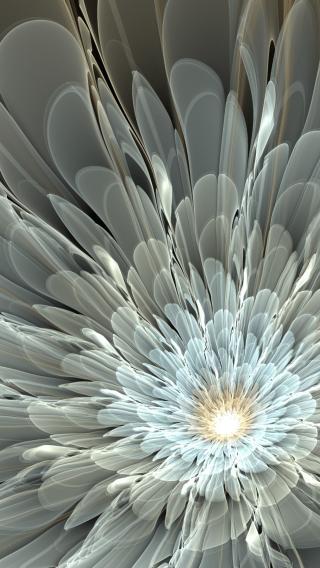 花瓣 白色 发散 盛开