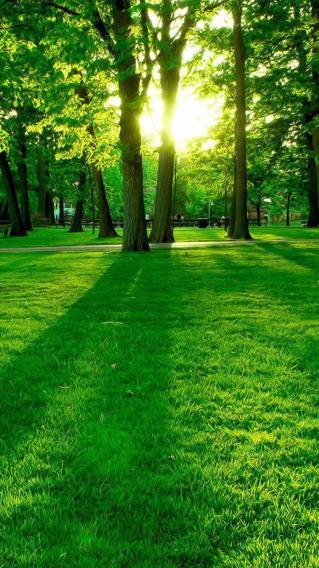 绿色护眼壁纸 绿意 草地