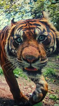 动物 老虎 森林