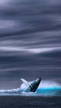 鲸 大海 浪 动物