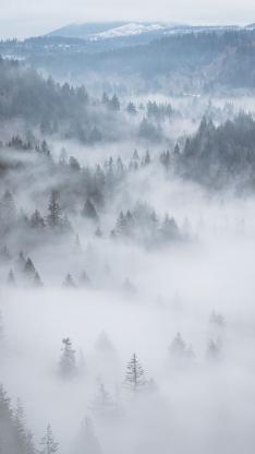森林 植物 云雾