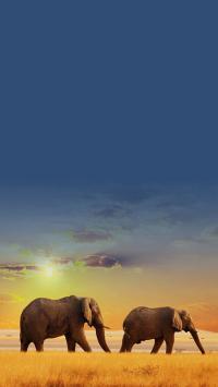 大象 草原 蓝天 日出