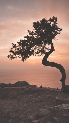 大自然 树木 天空