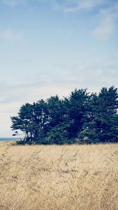 原野 芦苇 树木 蓝天白云