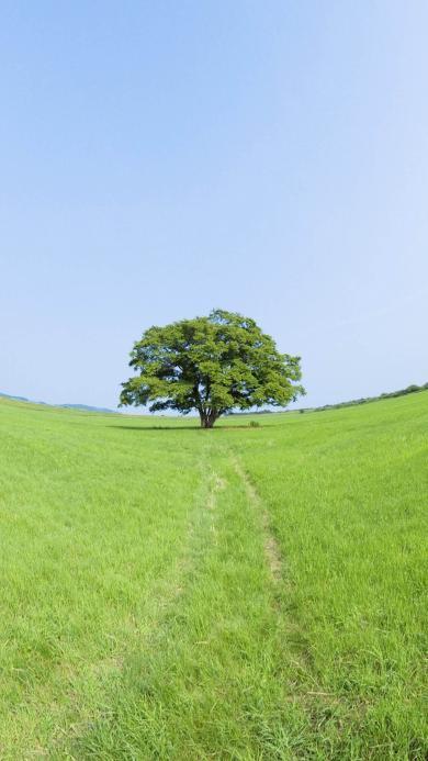 大自然 绿意 蓝天 户外