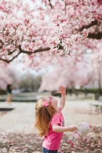 女孩 樱花 樱花树下 萌娃 花季 落花