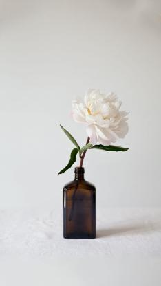 鲜花 花艺 日系 花道 白色 唯美