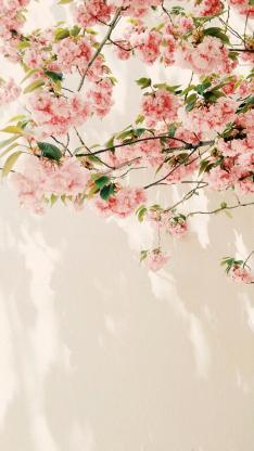 枝头上的粉色鲜花 植物